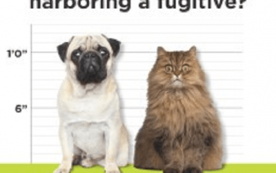 Online Pet Licensing Services Now Available